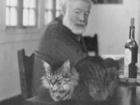 Ernest Hemingway had a  6 toed cat