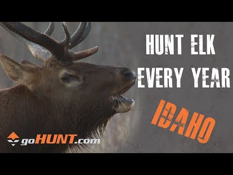 Hunt Elk Every Year: Idaho Elk