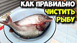 Как правильно чистить рыбу Первые впечатления от чистки щуки и толстолобика Детям не смотреть