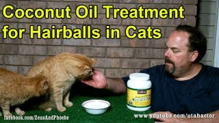 Natural Hairball Remedy Treatment Cats