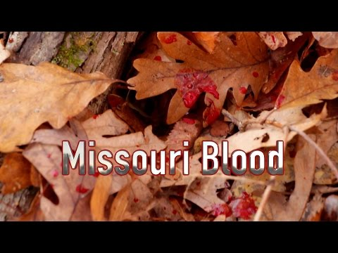Missouri Blood | MISSOURI PUBLIC LAND | Behind The Bow
