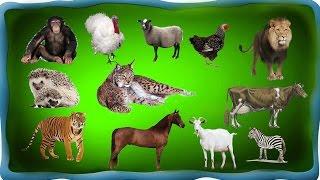 Развивающее видео для детей от 1 года. Домашние и дикие животные. Мультик про животных