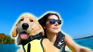 GOLDEN RETRIEVER PUPPY RIDES JET SKI