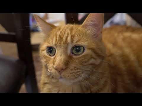 Kitten Close Up 4K! 2017-09-08