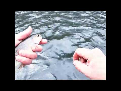 Trout Fishing On Elk River Tennessee
