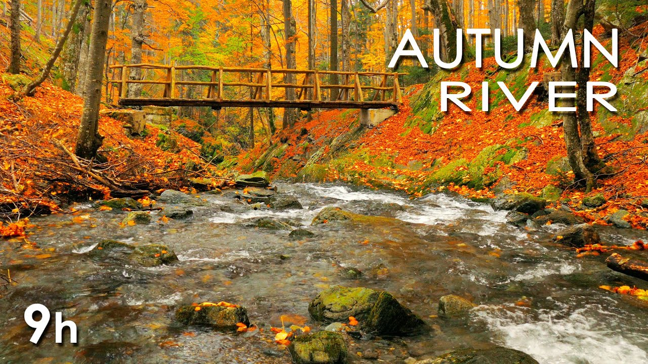 Autumn River Sounds Relaxing Nature Video Sleep Relax Study