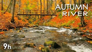 Autumn River Sounds    Relaxing Nature Video   Sleep/ Relax/ Study   9 Hours   Hd 1080p