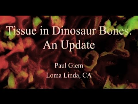 Tissue in Dinosaur Bones: An Update 6-20-2015 by Paul Giem