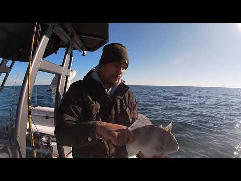 Catching Red Snappers And Triggerfish In The Gulf Of Mexico