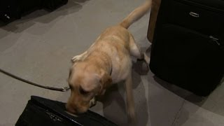 Demand Spikes For Bomb-sniffing Dogs