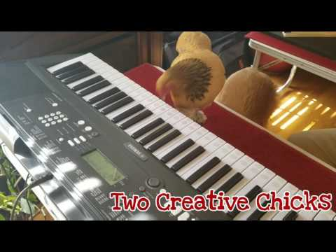 Chicken Plays Major Arpeggio Scales