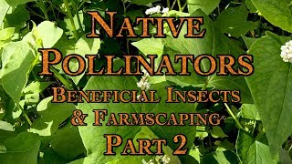 Native Pollinators, Beneficial Insects & Farmscaping Part 2