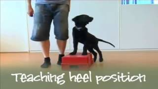 Dog Training Methods | Becoming A Supertrainer