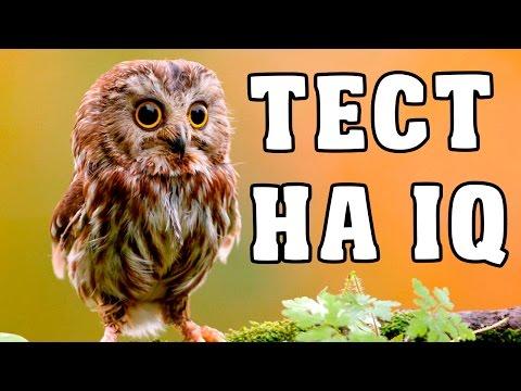 ТЕСТ - НАСКОЛЬКО ТЫ УМНЫЙ / ПРОВЕРЬ СЕБЯ! - Видео приколы ржачные до слез