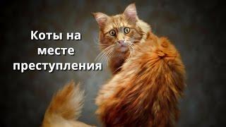 Коты на месте преступления
