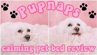 Pupnaps Dog Bed Review I Got My Dog A Calming/anxiety Bed