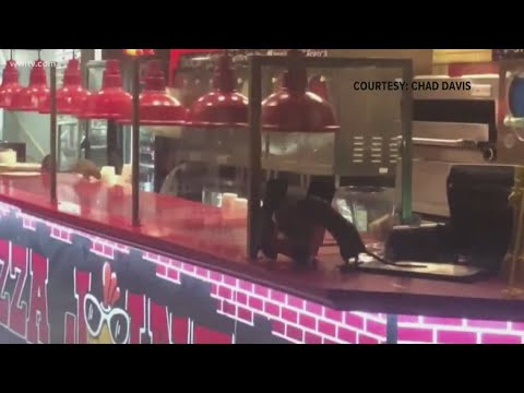 Restaurant Closed After Video Shows Rats Crawling On Counter