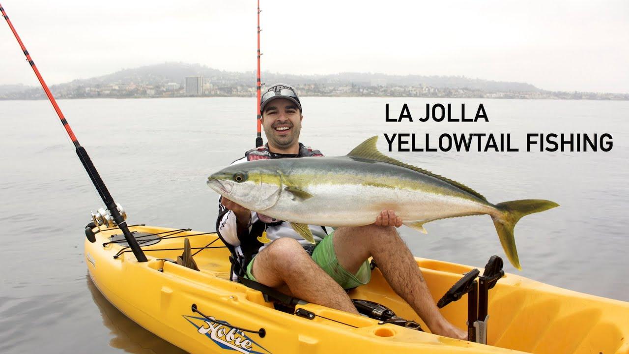 la jolla yellowtail fishing youtube