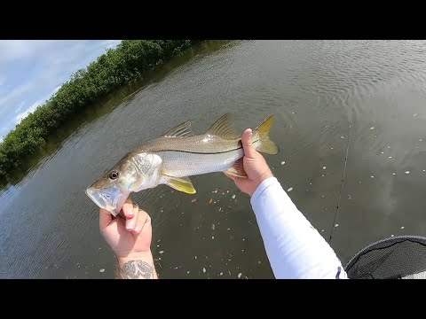 Hooked A Tarpon And Caught Some SNOOK In The BACKWATER
