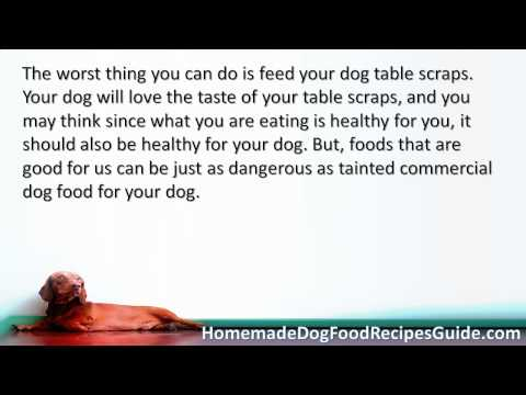 Dog Food Recipes For Dogs With Pancreatitis