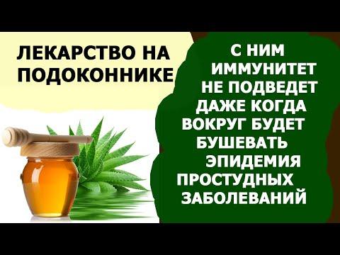 ПОЛЕЗНЫЕ СВОЙСТВА АЛОЭ ВЕРА ДЛЯ ОРГАНИЗМА. Рецепты алоэ с медом для иммунитета.