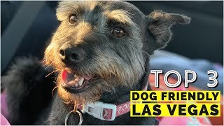Top 3 Dog Friendly Places in Las Vegas, Nevada   Dog Friendly Travel   ep 8
