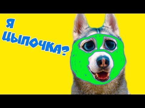 МАСКИ ДЛЯ ХАСКИ!! (Хаски Бандит) Говорящая собака