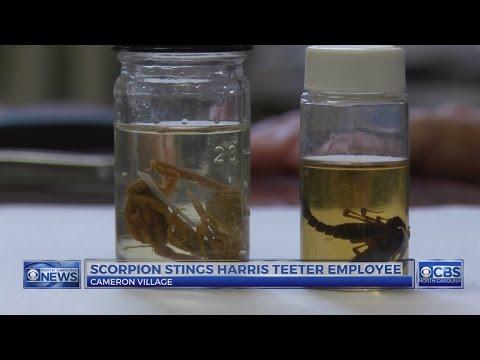 Scorpion stings Raleigh Harris Teeter employee