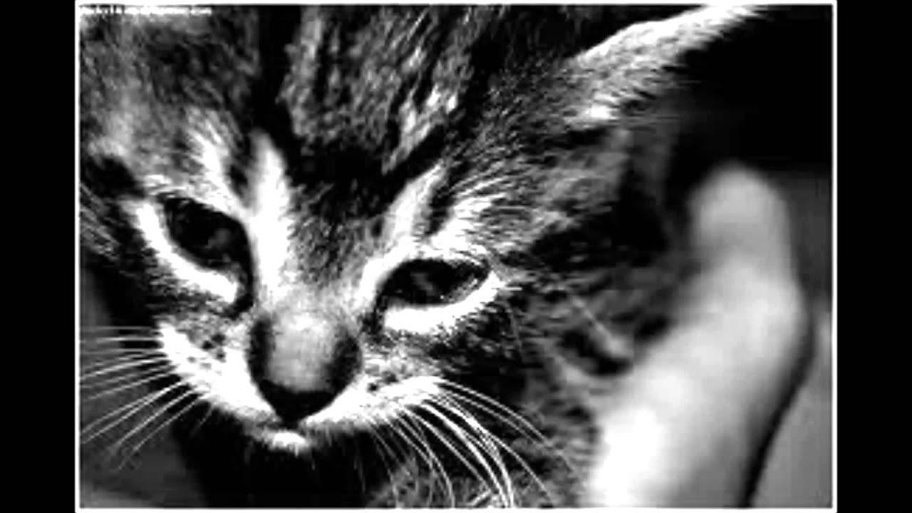 Sad cat diaries 2
