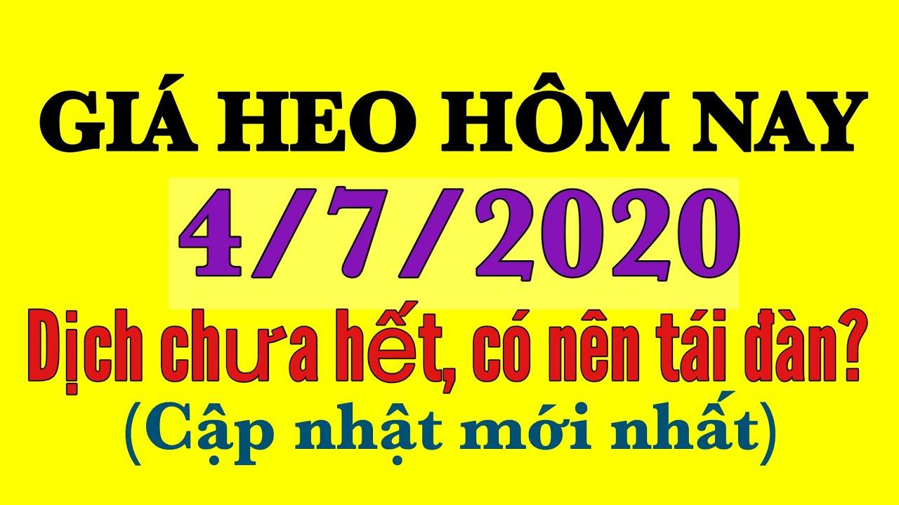 Giá heo hơi hôm nay ngày 4/7/2020   Có nên tái đàn vào thời điểm này?