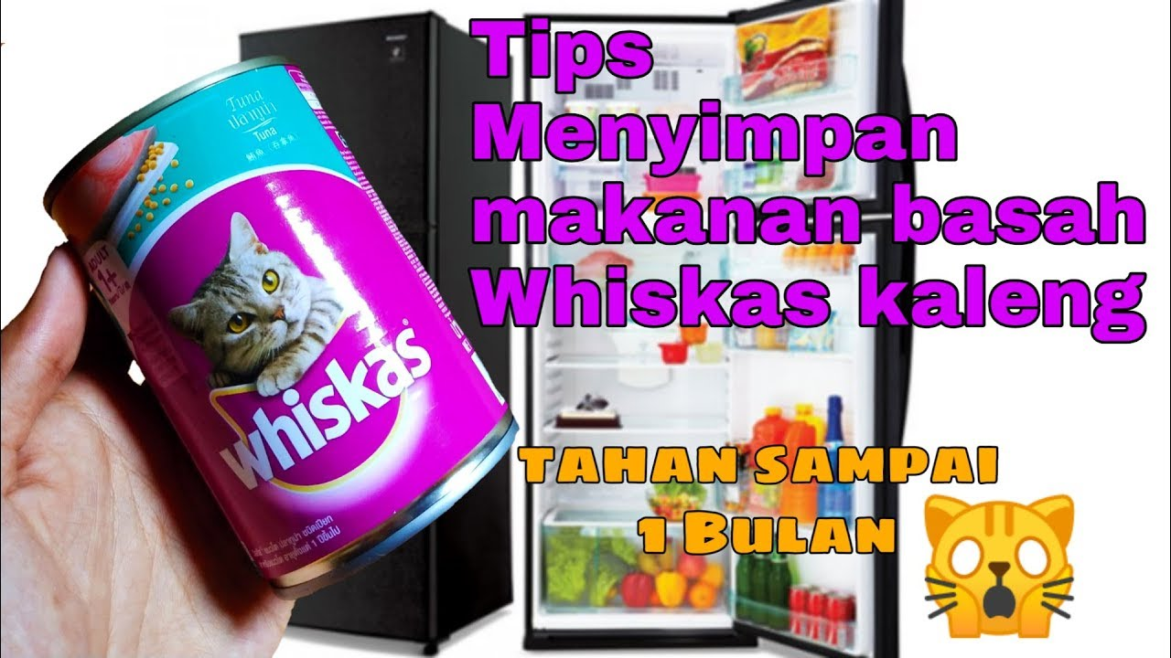 Cara Menyimpan Makanan Kucing Whiskas Kaleng Hello Cat Youtube