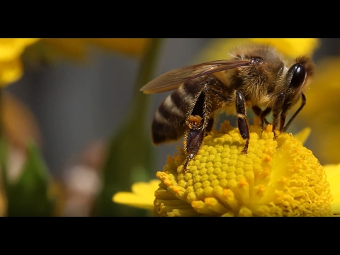 Pesticides Can Mess Up How Bees Fly