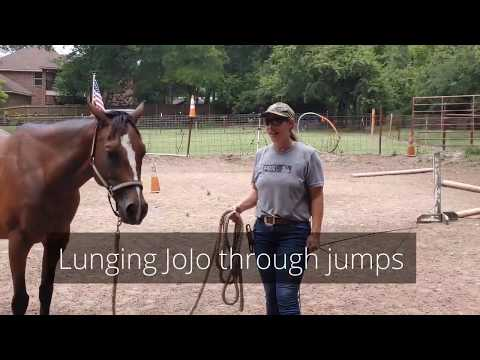 Groundwork Obstacles adding jumps and poles - tricks to get a horse over a jump on the ground