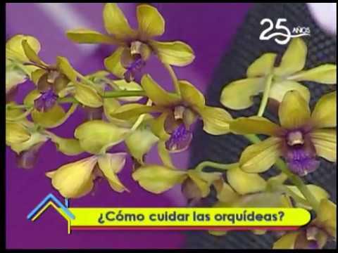 ¿Cómo cuidar las orquídeas?