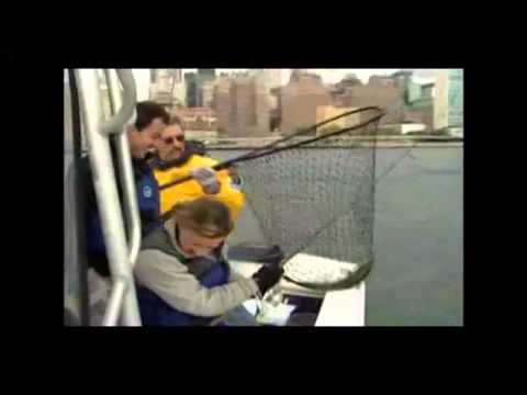 Urban Fishing In New York