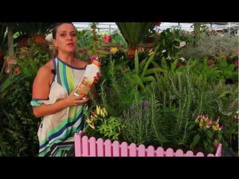 Il rosmarino come piantarlo e coltivarlo a spasso nell orto bonduelle tv funnycat tv - Coltivare piante aromatiche in casa ...