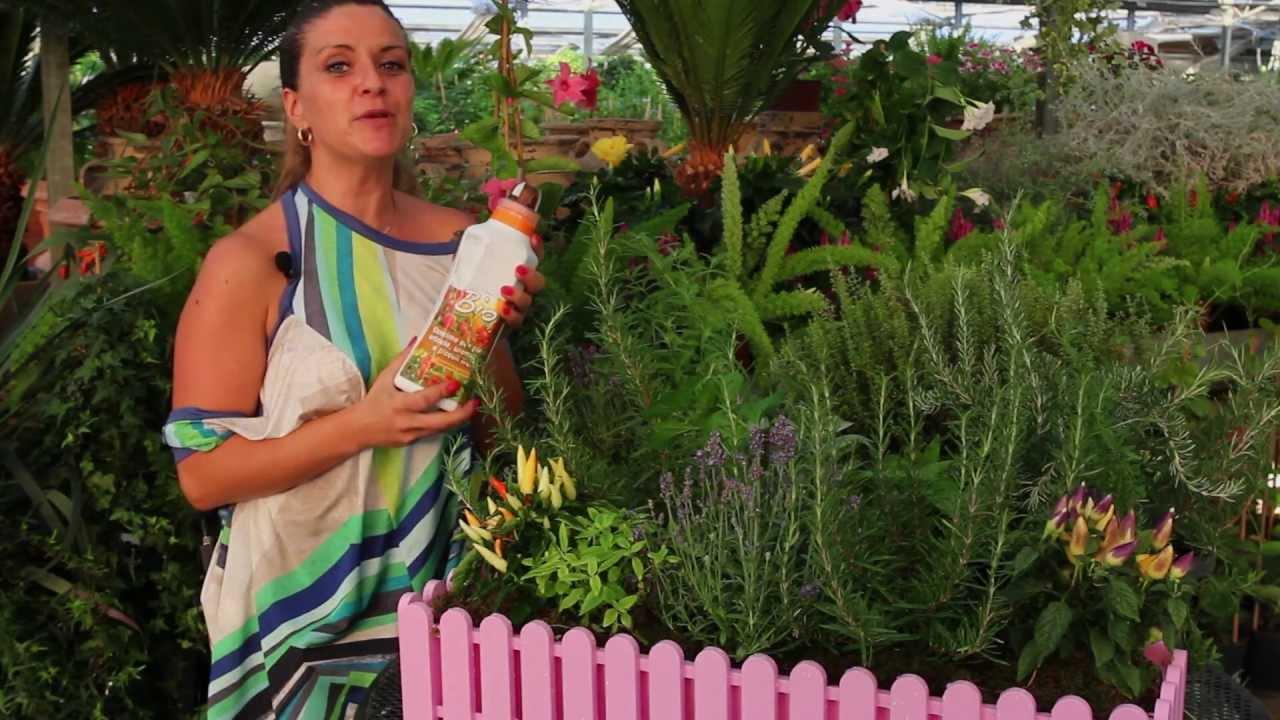 Coltivare In Casa Piante Aromatiche impara a coltivare piante aromatiche in casa - timo basilico menta salvia  maggiorana rosmarino