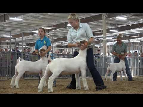 Paige Pence, Clark Co. — Ohio State Fair Grand Champion Market Goat