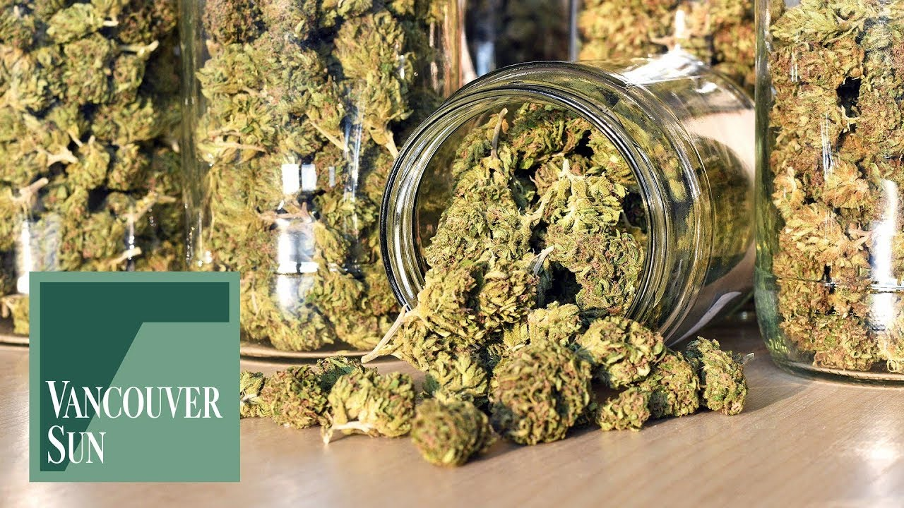How to grow your four legal marijuana plants: A beginner's