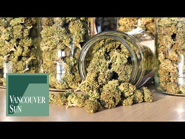 Marijuana Growers Handbook: Your Complete Guide for Medical and Personal Marijuana Cultivation