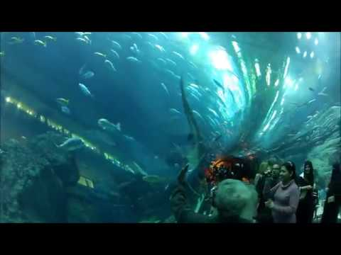 Sharks Dubai Aquarium Underwater Zoo Dubai Mall *HD*  | Azhar Vlogs | UAE | Dubai Jobs / Dubai Jobs