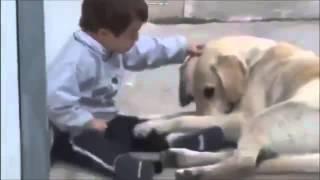 Собака пытается подружится с мальчиком-дауном