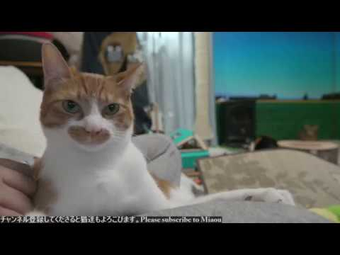 2018.6.16 猫日記   Cats & Kittens room 【Miaou みゃう】