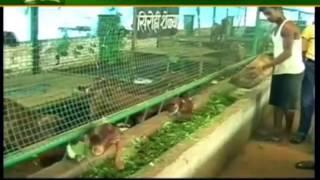 देखें: बकरियों की आवास और आहार प्रबंधन