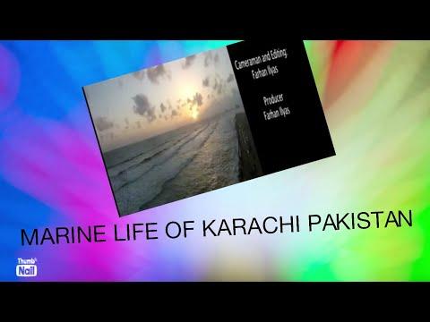Marine Life of karachi PAKISTAN