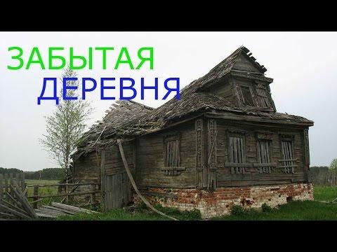 Коп по лесной дороге по выходу из леса появилась деревня