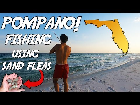 SURF FISHING For POMPANO With SAND FLEAS During Summer! We Didn't EXPECT This! Florida Surf Fishing