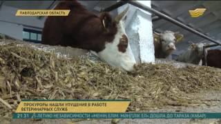 В Павлодарской области прокуроры нашли упущения в работе ветеринарных служб