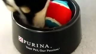 How To Slow Down Your Dog's Eating - Purina
