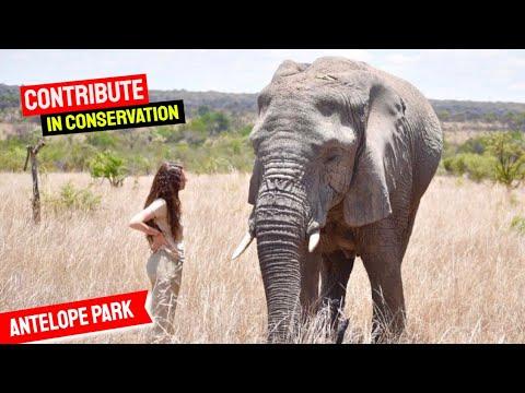 Lion Conservation project